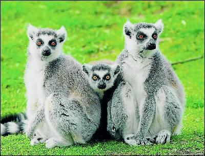 La fauna llegó a Madagascar flotando